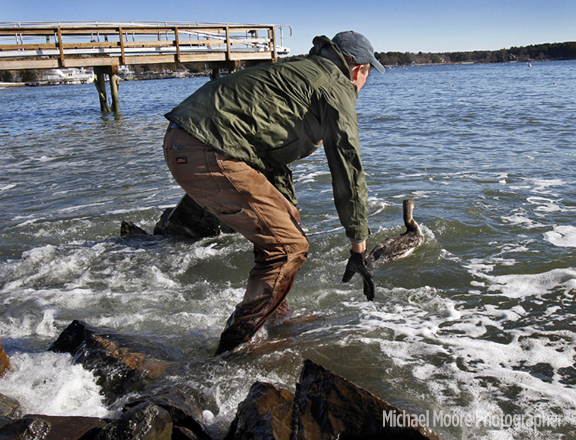 John Colley, of Moutonborough, senior biologist with the Loon Preservation Committee, releases the Highland Lake loon into the surf off Kittery Point, Maine, on Sunday.